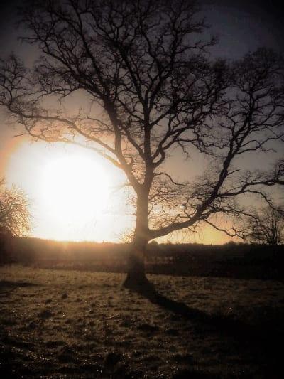 ireland tree