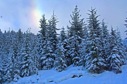 12-20-2015 Winter Image